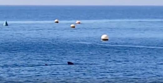 Avistan un tiburón de cuatro metros frente a la playa de Calahonda