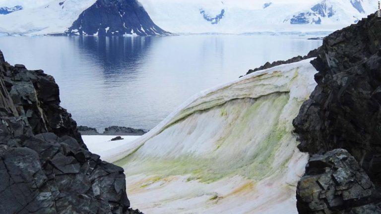 La nieve se está volviendo verde en la Antártida (y el cambio climático lo empeorará)