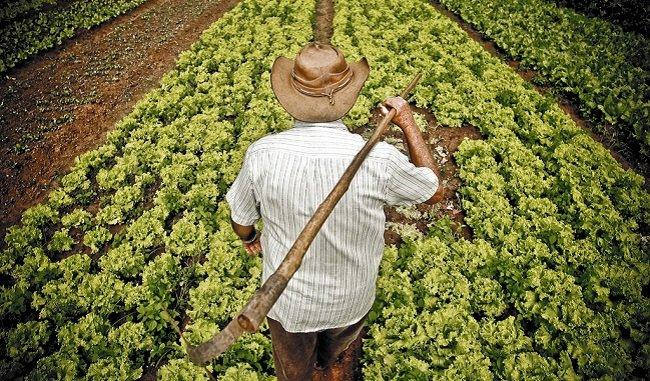 Bizkaiko Aldundiak 2,1 milioi euroko konpentsazioa emango dio nekazaritza sektoreari