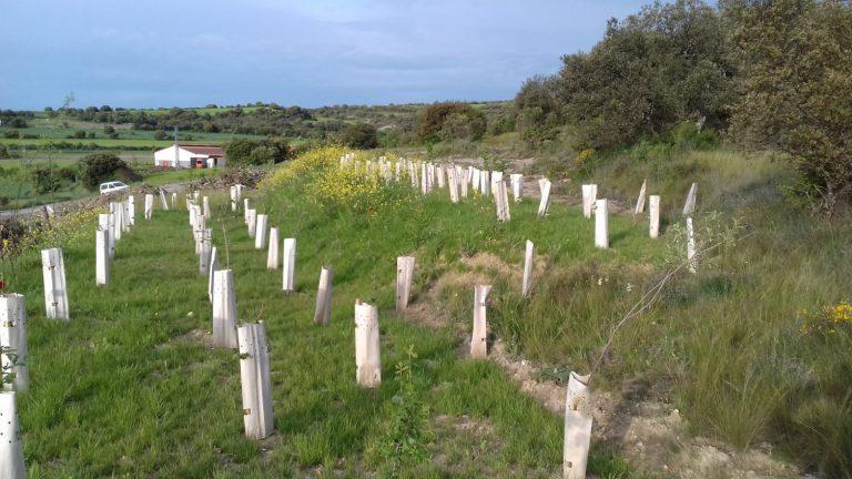 URA restaura suelos en Artaza-Foronda con sedimentos y madera extraídos de actuaciones de restauración de ríos