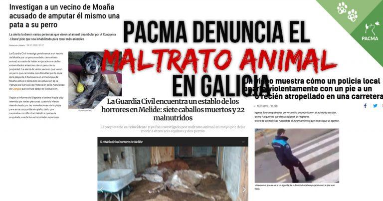 Los caballos muertos en Melide, el gatito pateado en Pontedeume, el crimen de Alma… Desde PACMA, contra el maltrato animal en Galicia