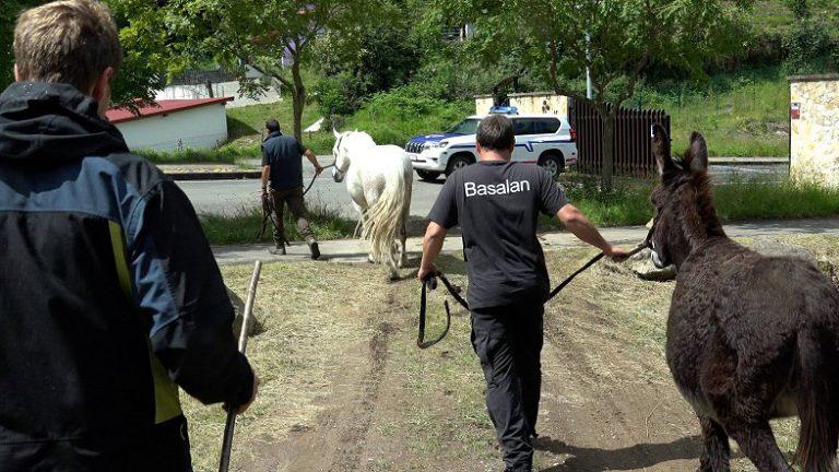 La Diputación de Bizkaia retira seis cabezas de ganado de propietarios que utilizaban sin autorización unas zonas de pasto en La Arboleda