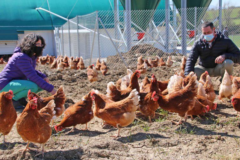 Una nueva granja de huevos ecológicos en Zalduondo, Araba, refuerza el suministro local